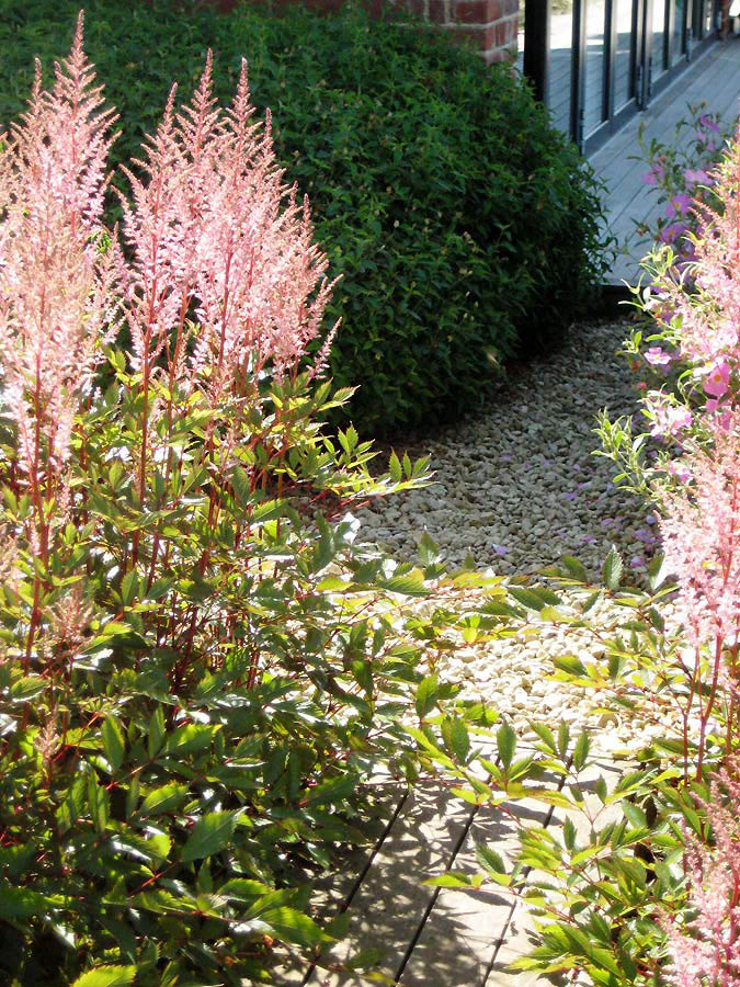 Detail of gravel path near the house. Rae Wilkinson Garden and Landscape Design - Garden Designer Sussex, Surrey, London, South-East England