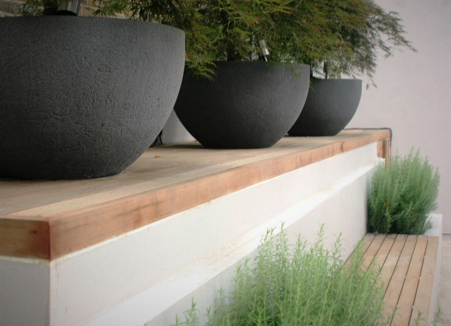 City Retreat Garden London. Three planters with Acers. Rae Wilkinson Garden and Landscape Design - Garden Designer Sussex, Surrey, London, South-East England