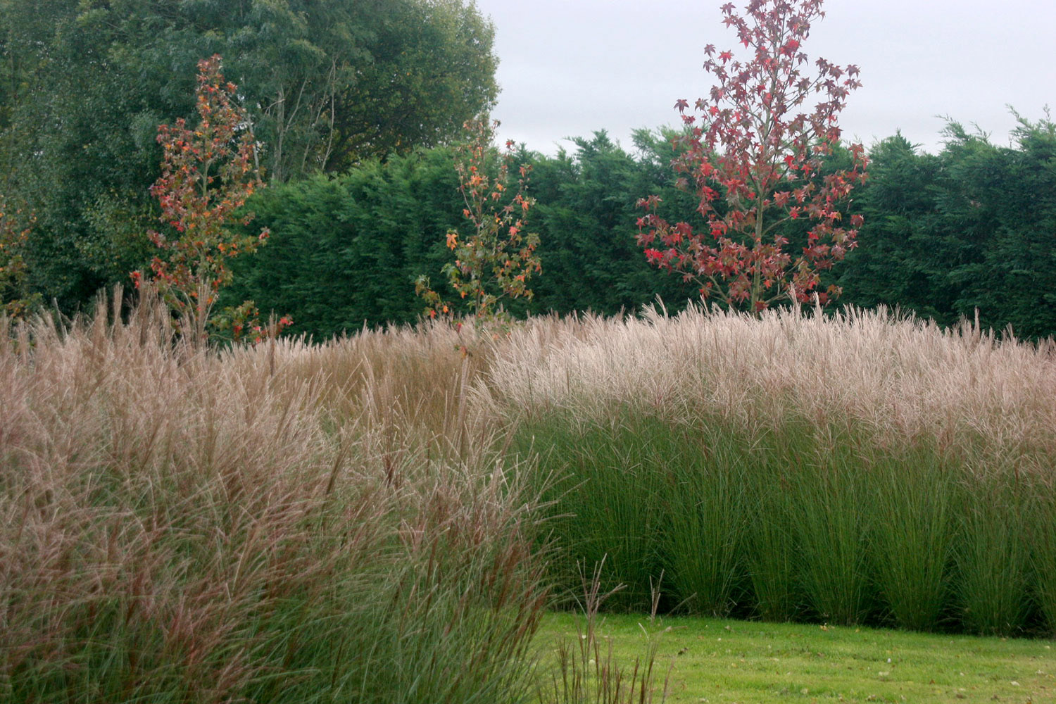 Rae Wilkinson Garden and Landscape Design - Garden Designer Sussex, Surrey, London, South-East England